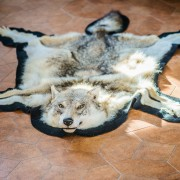 taxidermiste outaouais