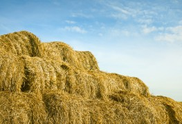 Premiers soins pour votre pelouse: éliminez le chaume