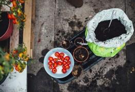 9 idées pour choisir vos fruits et légumes à planter