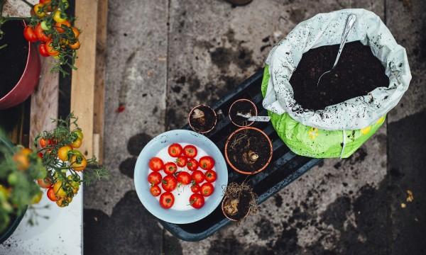 9 idées pour choisir vos fruitset légumes à planter