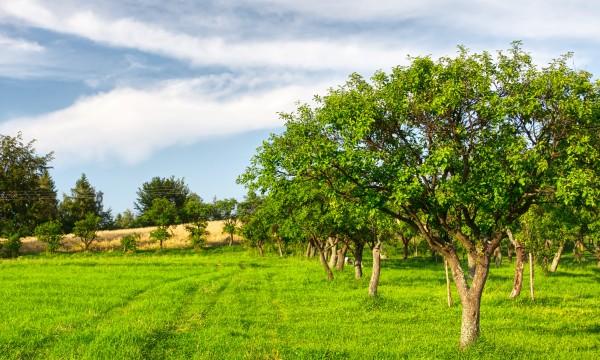 Conseils pour la transplantation des arbres et des for Arbres decoratifs jardin
