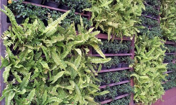 4 conseils pourcommencer un jardin vertical sans vous ruiner