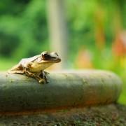 Comment attirer la vie sauvage dans son jardin