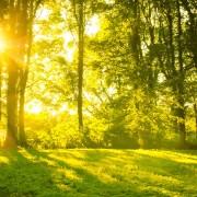 Comment augmenter votre apport en vitamine D