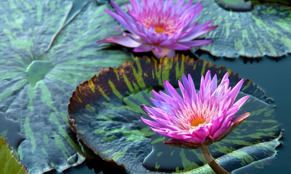 Construire et entretenir un jardin aquatique en 5 étapes