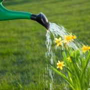 3 caractéristiques pouvant améliorer votre jardin