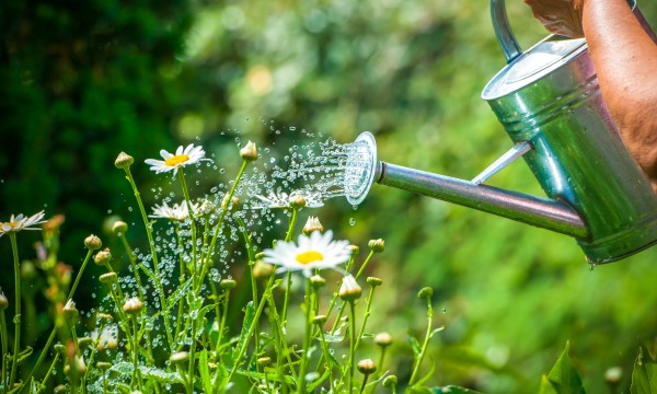Trucs pour récupérer les eaux de pluie et avoir des plantes luxuriantes