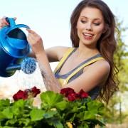 Arrosez-vousvos plantes correctement?