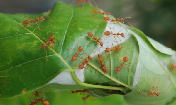 10 fa ons de s occuper des fourmis dans un jardin trucs pratiques - Fourmis dans le jardin ...