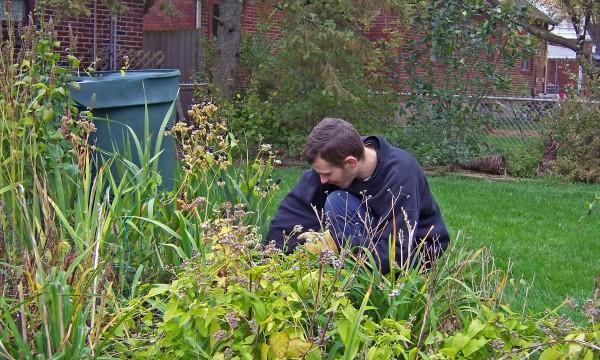 5 conseils pour traiter les mauvaises herbes